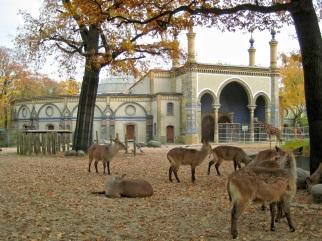 Giraffenhaus_Zoo_Berlin_2