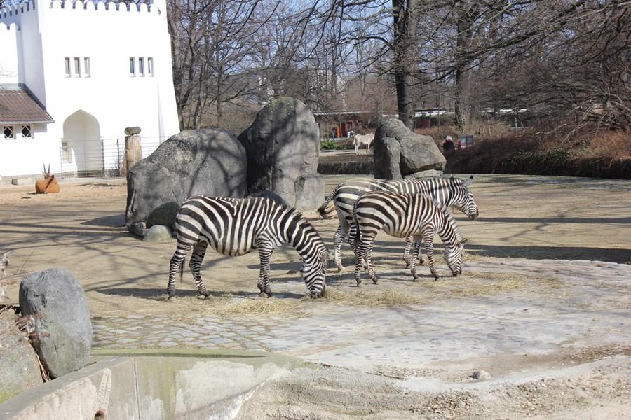 Zoo-Berlin2